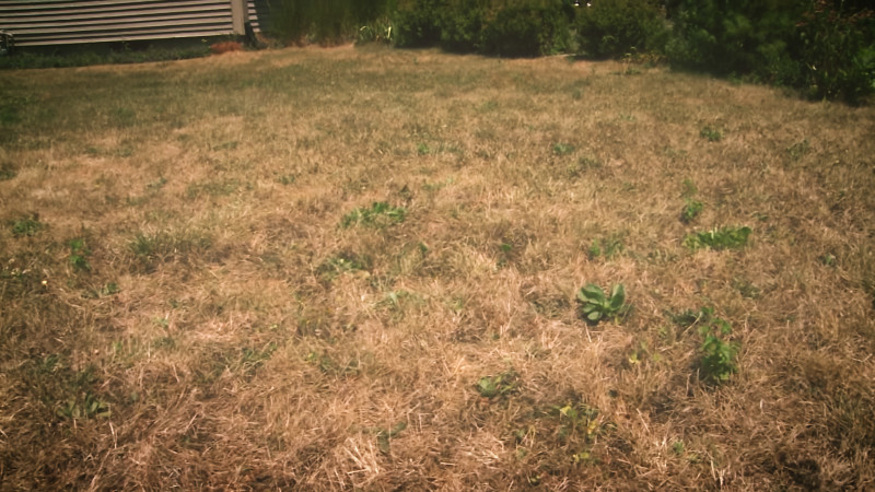 your-lawn-in-times-of-drought