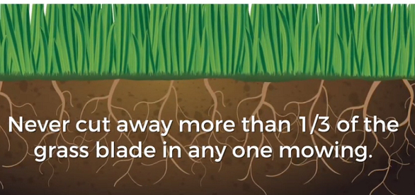 Mowing Your Nice Lawn. How Often You Should Do This?