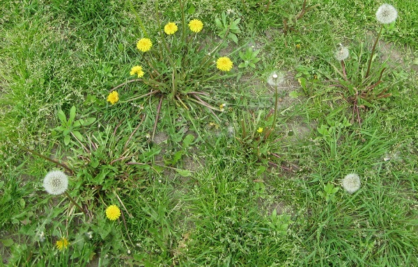 How To Get Rid Of Weeds On Lawn - Step-By-Step Recommendations.