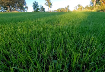 How to Choose Grass Seed For Your Lawn?