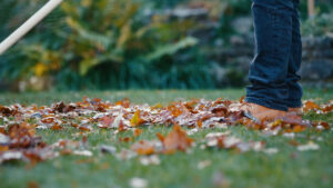 Fall is coming and you should prepare your lawn for winter