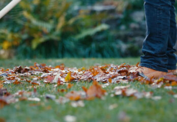 Prep Lawn For Winter - Tips & My Thoughts