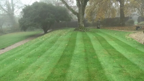 Level your mower. Prep lawn for winter