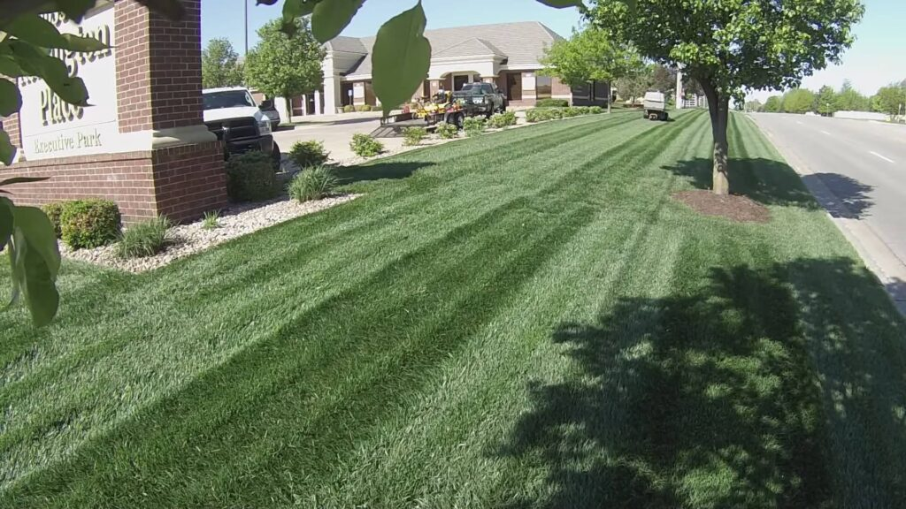 lawn and stripes