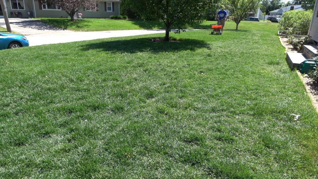 How To Get Grass To Grow In Clay Soil