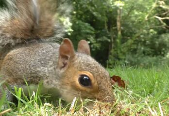 How To Prevent Squirrels From Digging Up My Lawn?