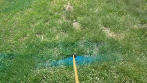 How To Get Rid Of Grass In My Garden