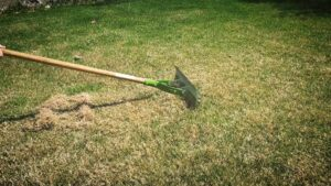 Dethatching and Everything You Should Know How To Do It Correctly