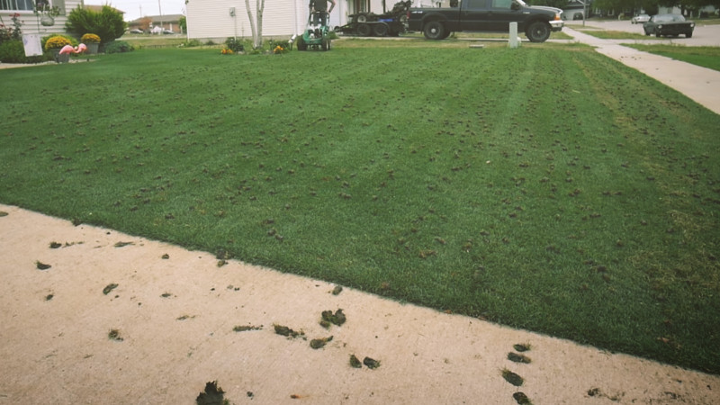 Why Aerate The Lawn?